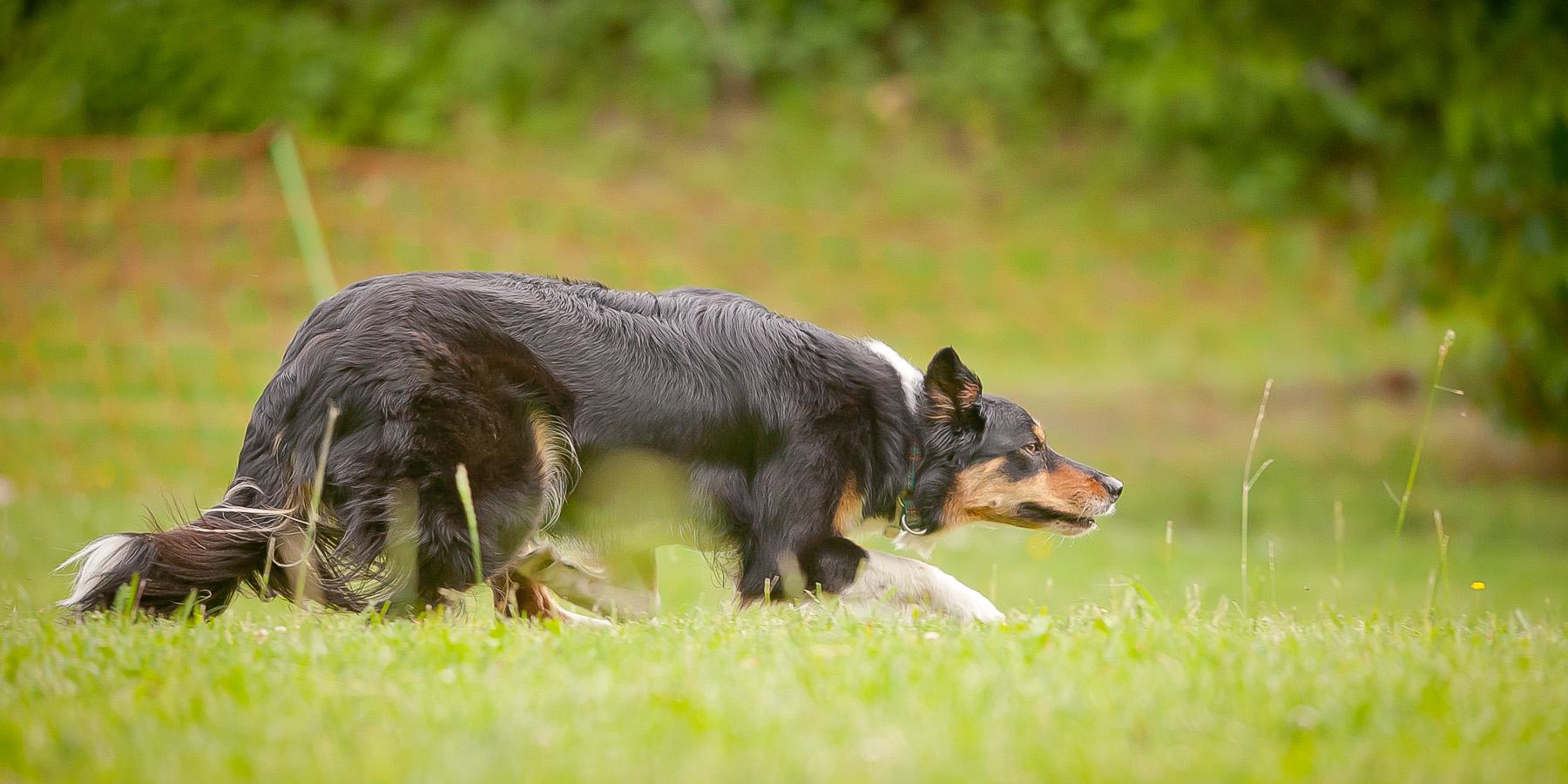 Die Tierarztpraxis Grath bietet auch eine Hundeschule an in der auch eine Verhaltenstherapie möglich ist