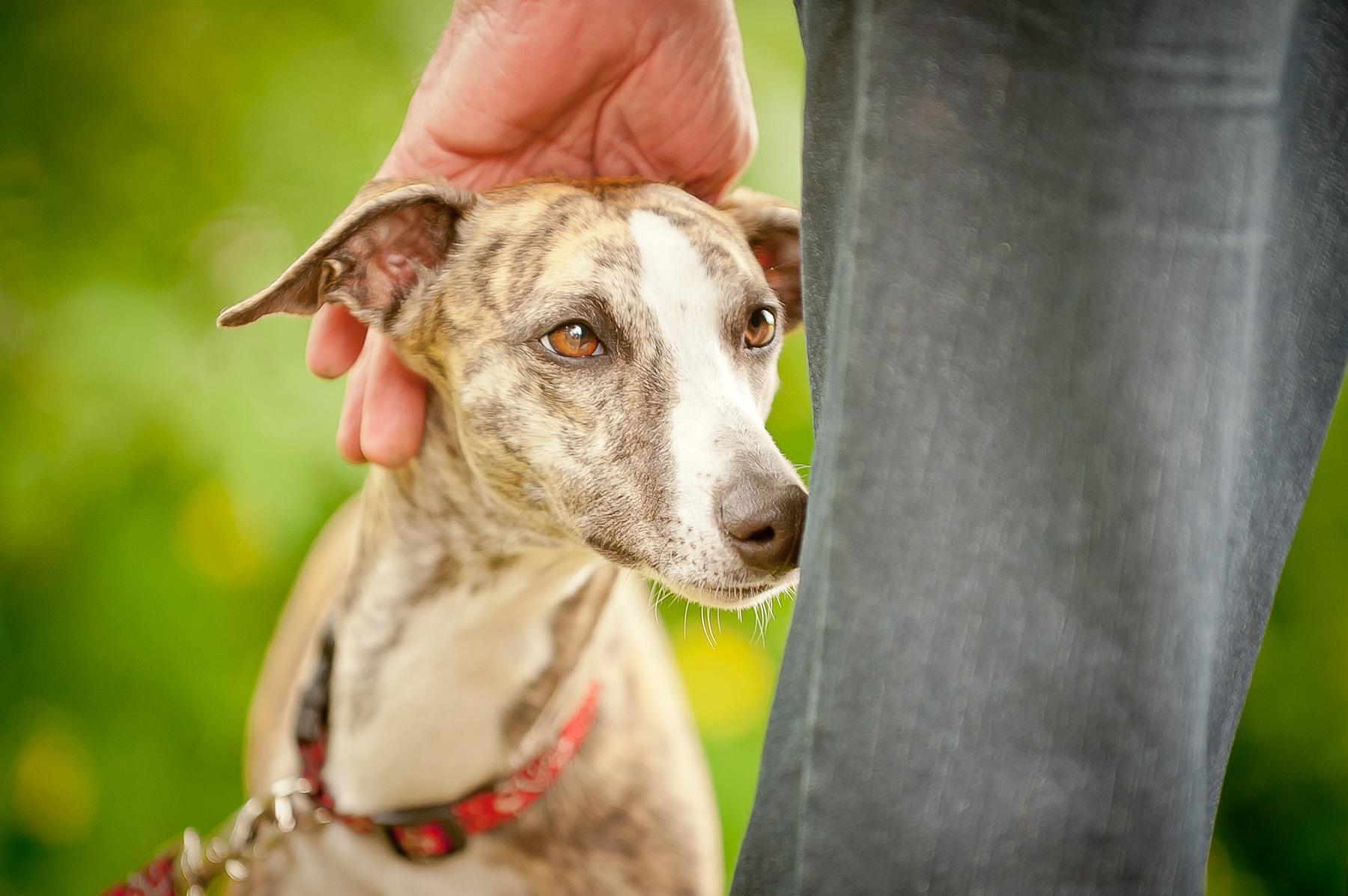 Die Tierarztpraxis Grath bietet auch eine Mobile Tierarztpraxis an, mit dem Ziel qualitativ hochwertiger medizinischer Versorgung bei Ihnen zu Hause