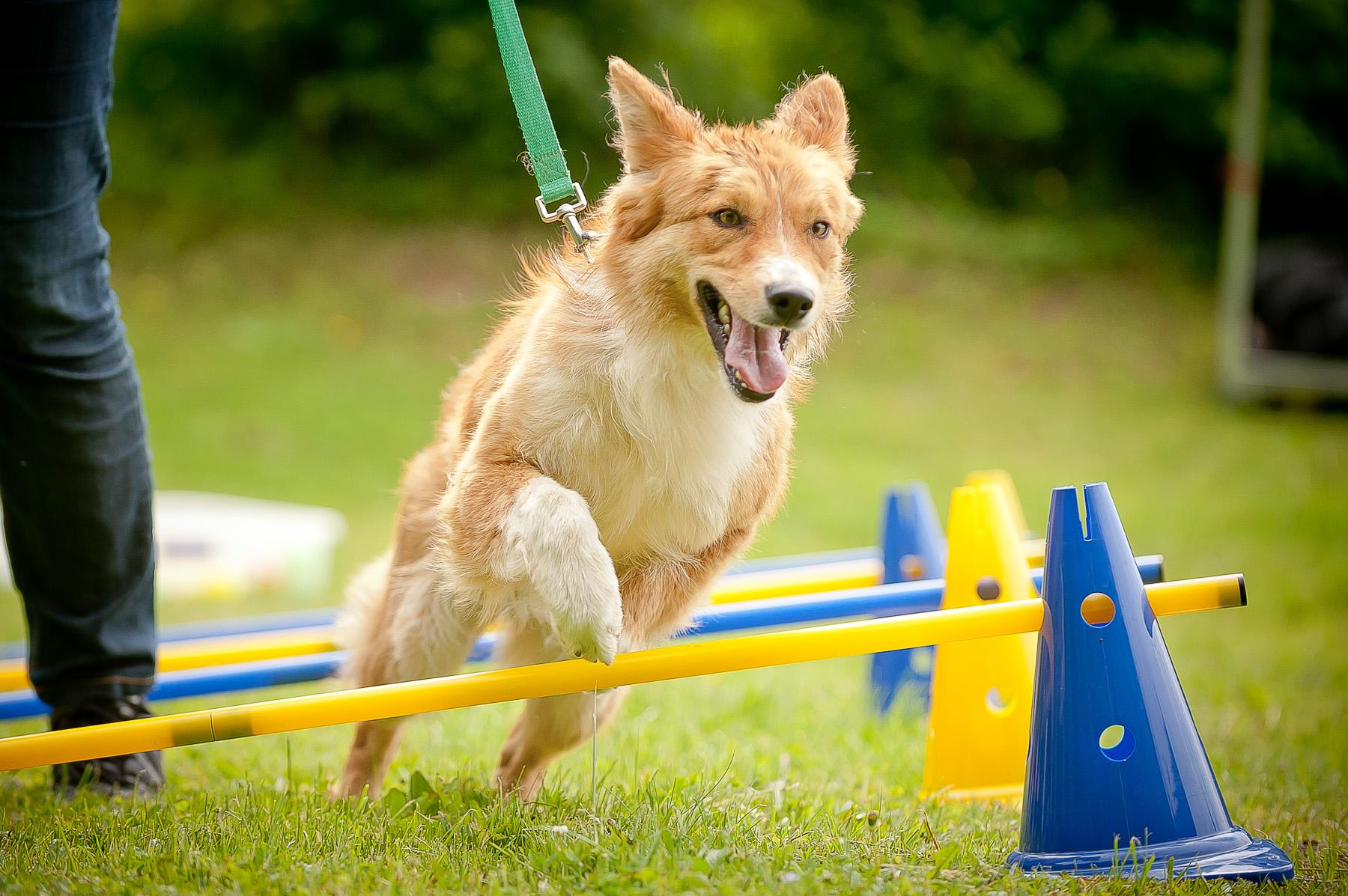Die Tierarztpraxis Grath bietet auch eine Hundeschule an, bei der Sie an offenem Sport und Spaß teilnehmen können