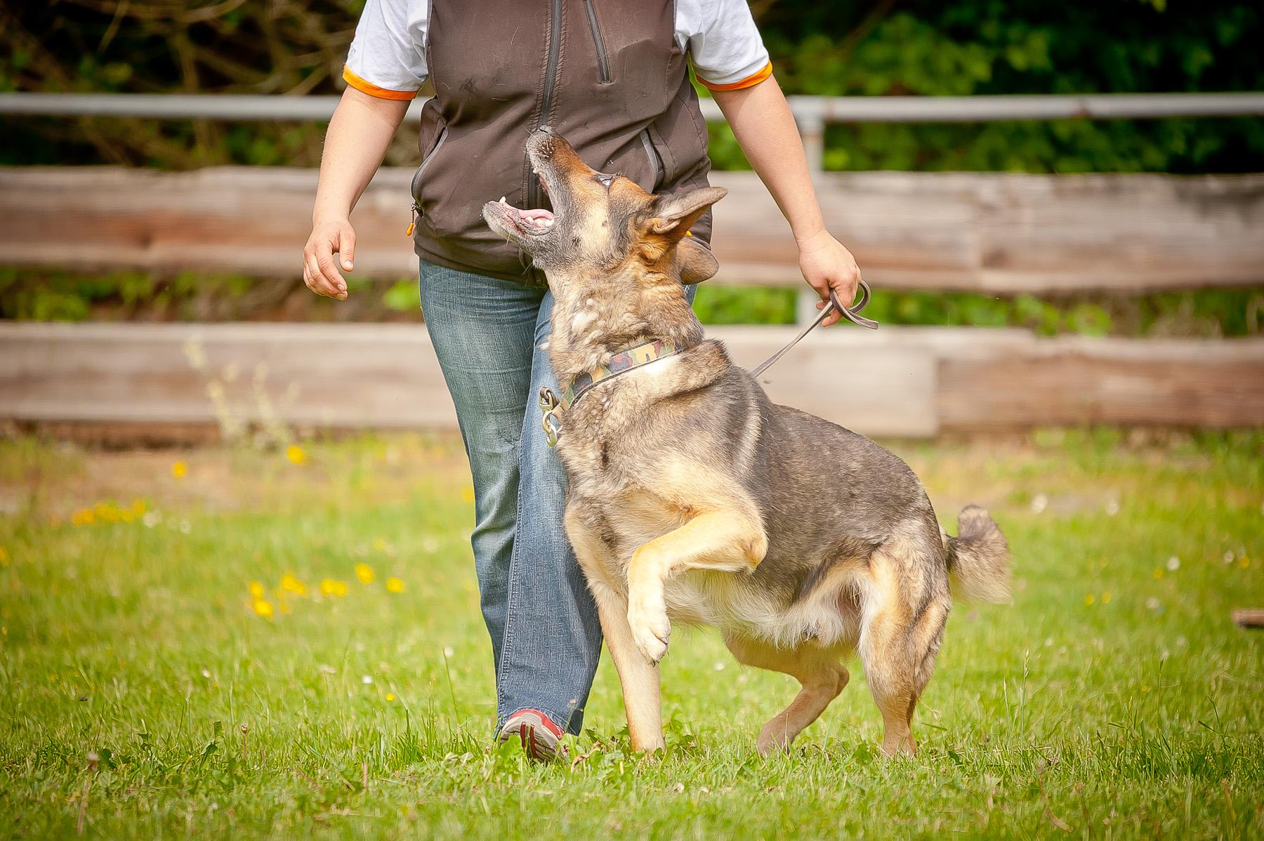 Die Tierarztpraxis Grath bietet auch eine Hundeschule an, bei der Sie an einem Grundkurs teilnehmen können