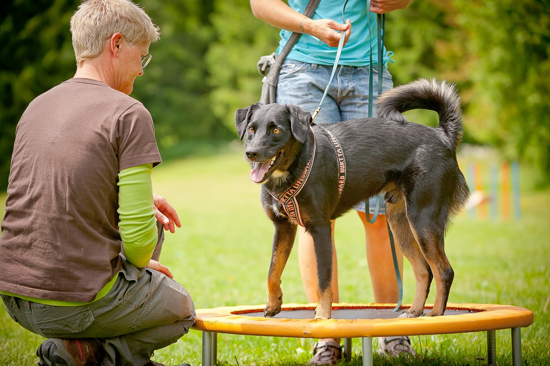 Die Tierarztpraxis Grath bietet auch eine Hundeschule an, bei der Sie an der Hundeuni teilnehmen können
