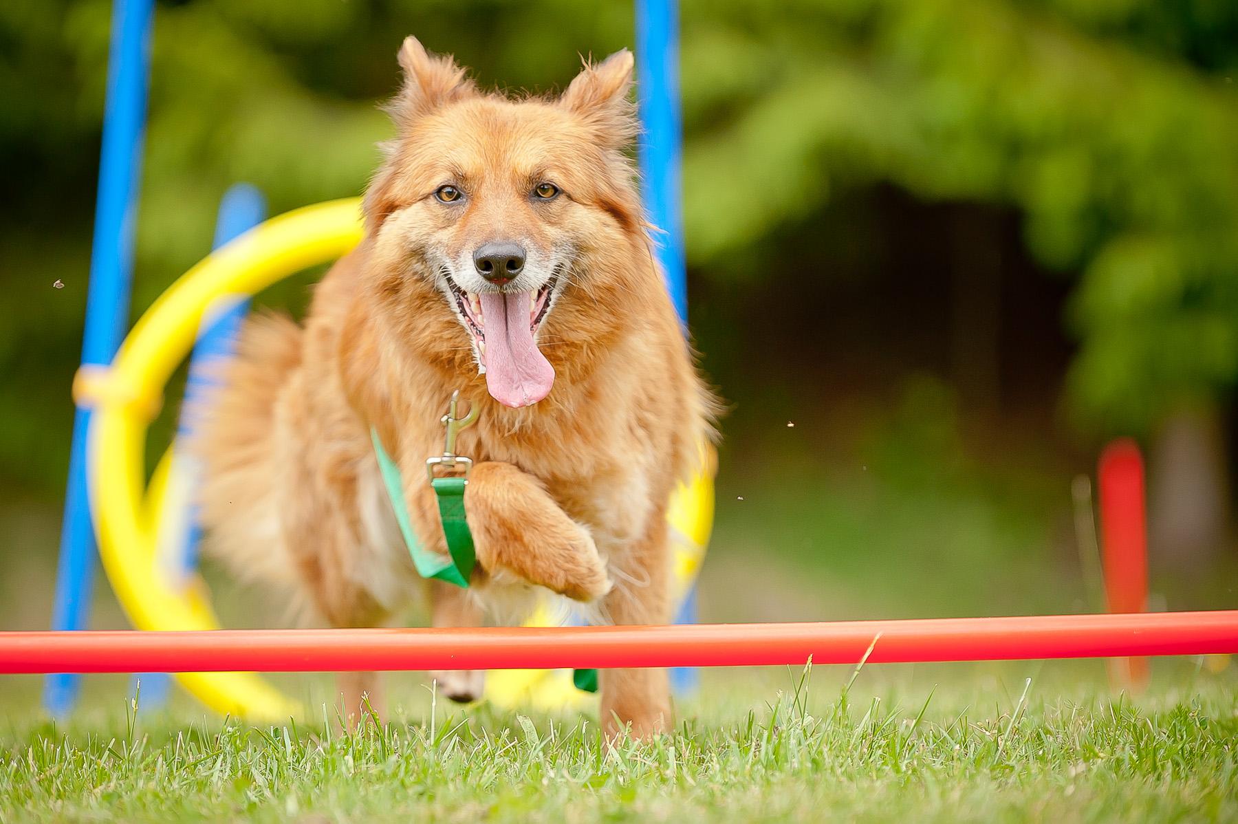 Die Tierarztpraxis Grath bietet auch eine Hundeschule an, in der es auch ein Trainingscamp gibt