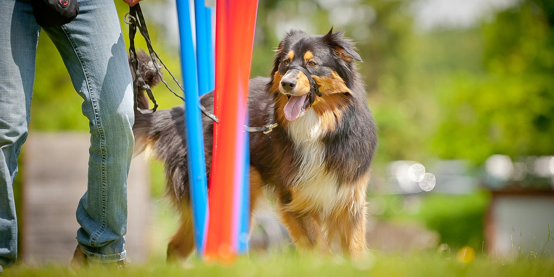 Die Tierarztpraxis Grath bietet auch eine Hundeschule an, bei der Sie an der Rüpelgruppe teilnehmen können