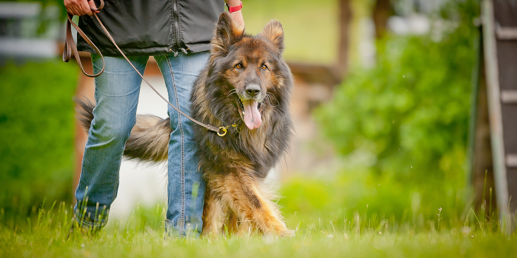 Die Tierarztpraxis Grath bietet auch eine Hundeschule an, bei der an einem offenen Hundekurs im Bereich Sozial teilnehmen können