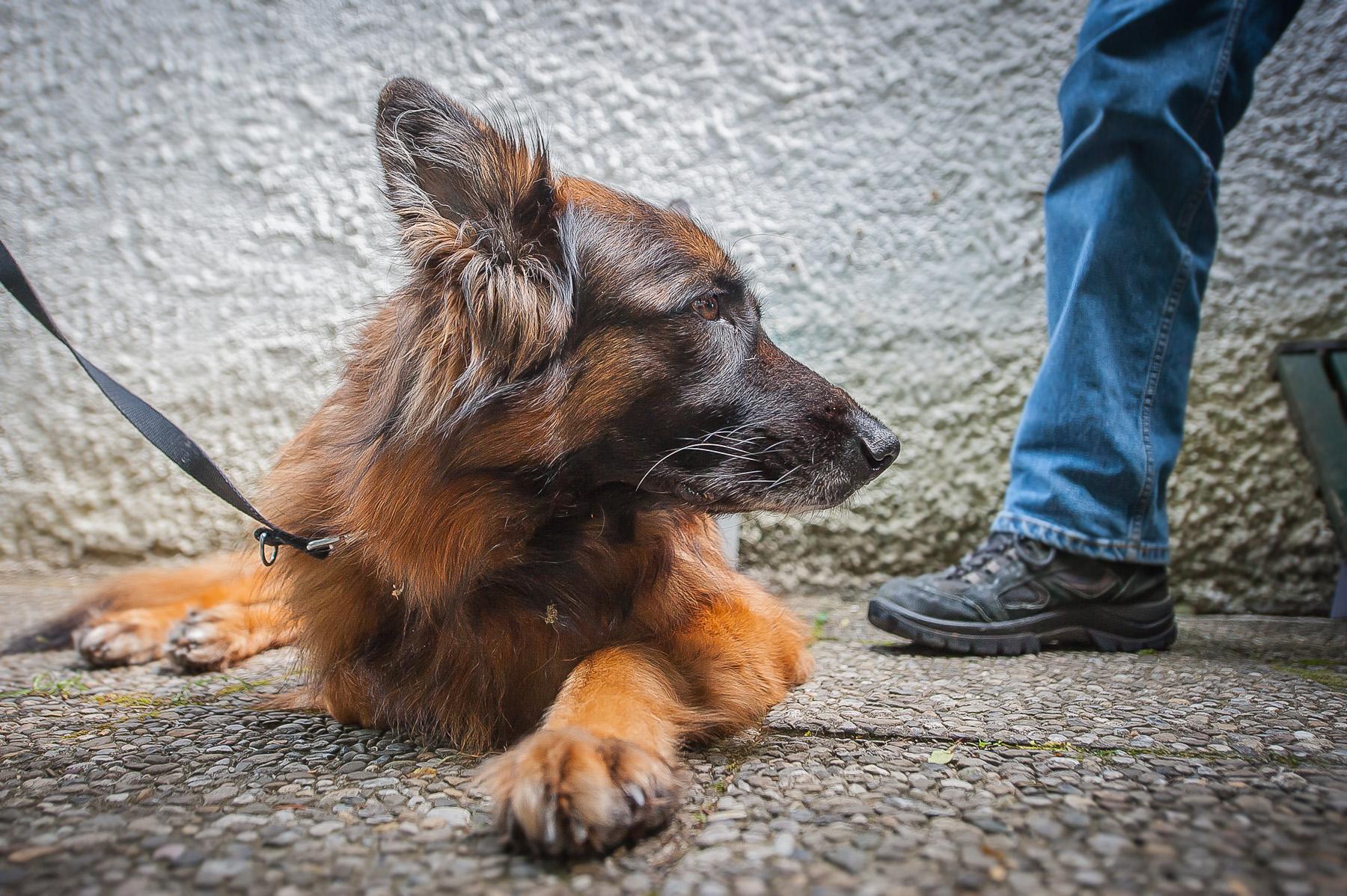 Die Tierarztpraxis Grath bietet auch eine Hundeschule an, bei der Sie an offenen Hundekursen in der Stadt teilnehmen können