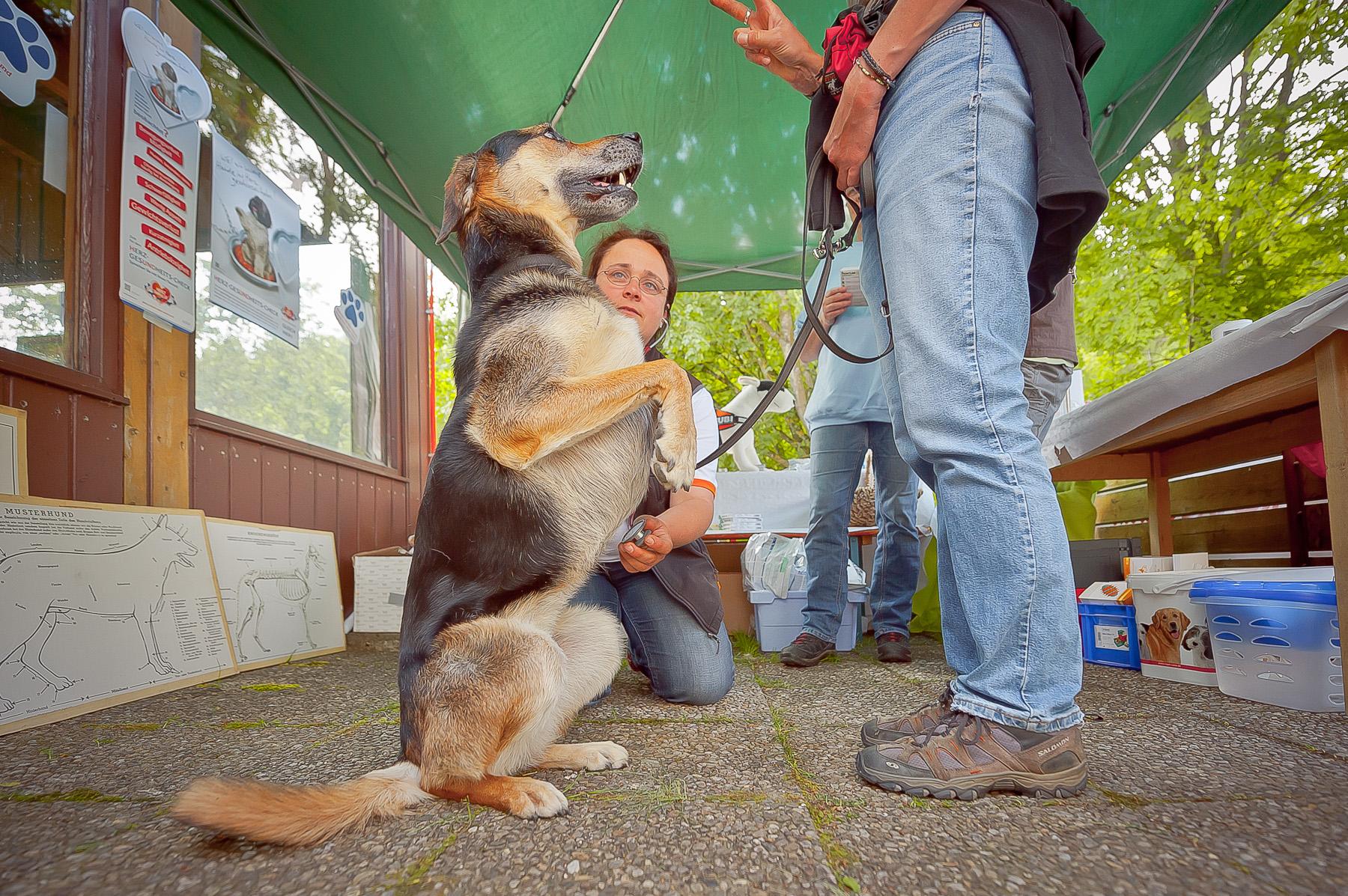 Die Tierarztpraxis Grath bietet auch eine Hundeschule an, bei der Sie mit Hundesenioren bei der offenen Mobility teilnehmen können