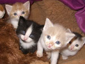 Die Tierarztpraxis Grath arbeitet regelmäßig mit anderen Tierärzten zusammen