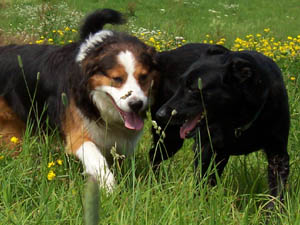Die Tierarztpraxis Grath bietet folgende Services für andere Tierärzte an: Rücküberweisung, Diagnose und Trainingsempfehlung, Empfehlungen für weitere Untersuchungen, Medikamentenvorschläge und Prognose