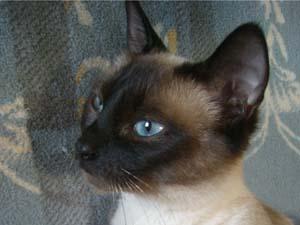Die Tierarztpraxis Grath bietet anderen Tierärzten an Hausbesuche weiterzugeben mit folgenden Services: Tierärztliches Handeln, Besprechung über weiteres Vorgehen und Euthanasie
