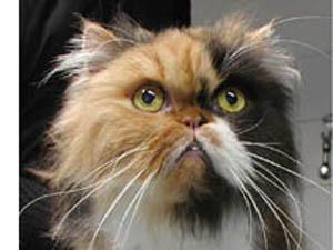 Die Tierarztpraxis Grath bietet auch Sterbehilfe an, bei der Sie den Ort der Euthanasie bestimmen dürfen