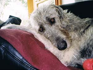 Die Tierarztpraxis Grath bietet auch Sterbehilfe an und klärt Sie dabei auf, was nach der Euthanasie passiert