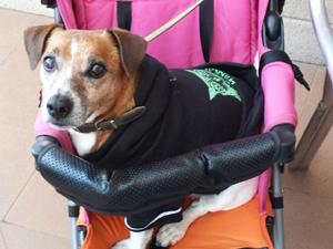 """Henry"" Jack Russel Terrier, Hundeschule"