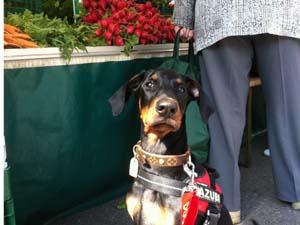 Die Tierarztpraxis Grath bietet auch eine Hundeschule an, bei der Sie am Workshop für Apportieren teilnehmen können