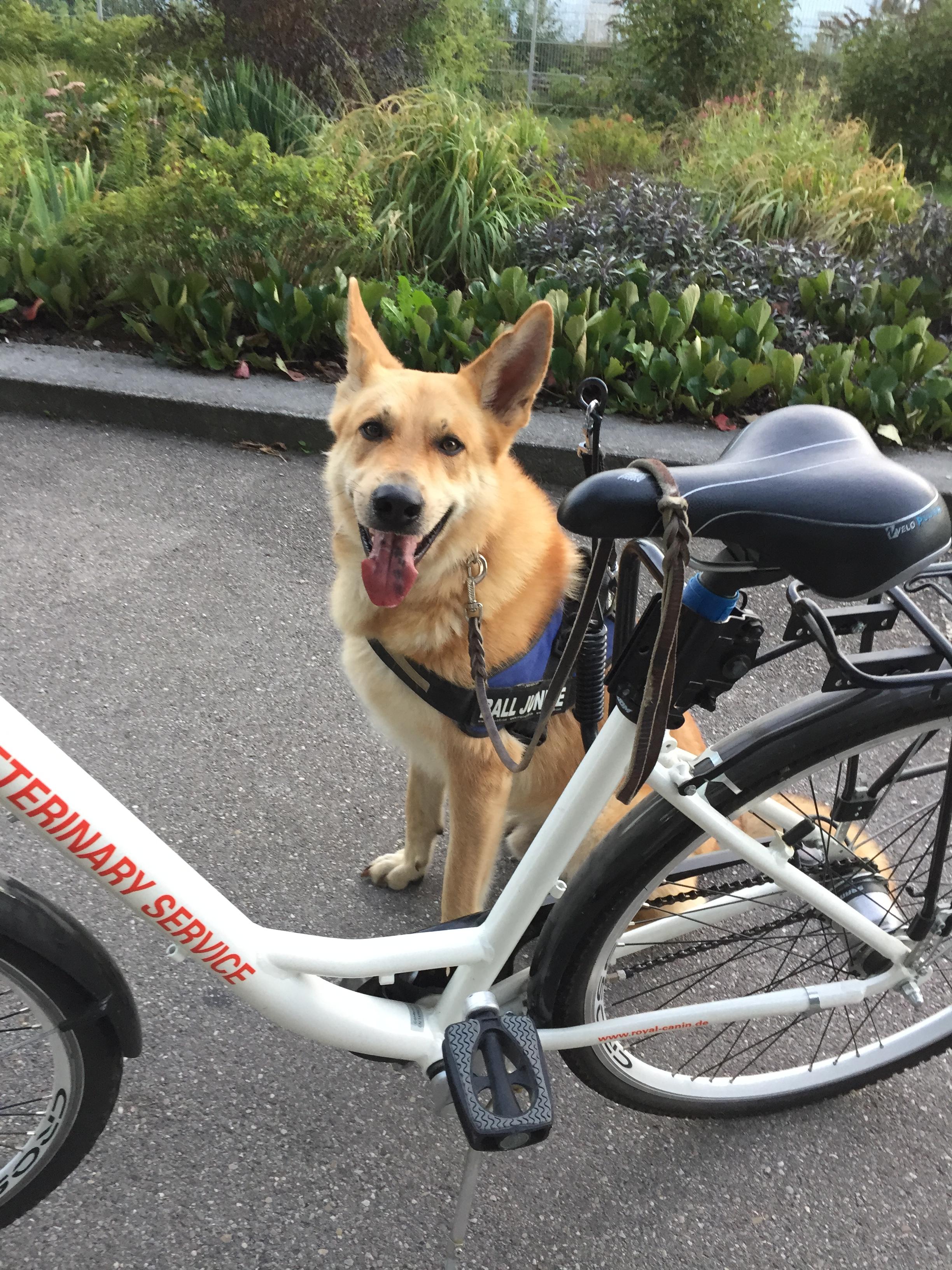 Die Tierarztpraxis Grath bietet auch eine Hundepension an bei der Sie ihren Hund in den Aktiv Urlaub schicken können