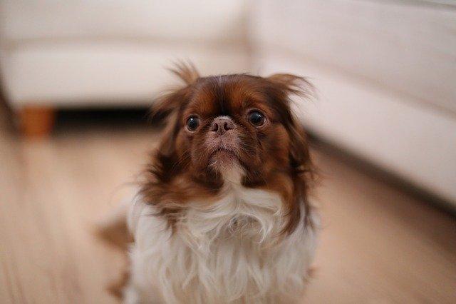 Die Tierarztpraxis Grath bietet auch eine Hundeschule an in der z.B. auch Einzeltrainings möglich sind