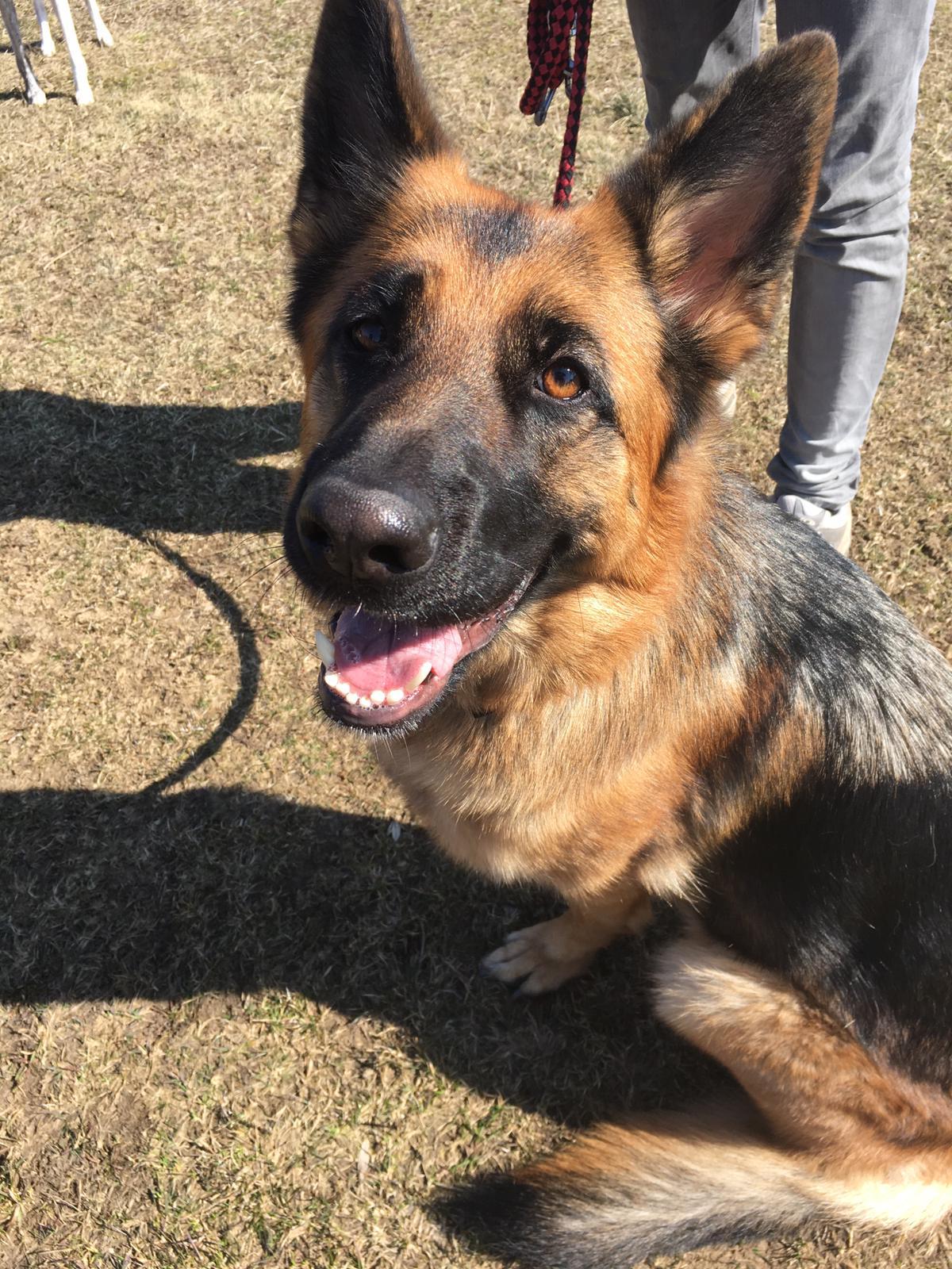 Die Tierarztpraxis Grath bietet auch eine Mobile Tierarztpraxis an mit Medizinischen Behandlungen und Verhaltenstherapie per Hausbesuch für alle Tierarten